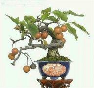 梨树vwin casino